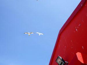 sky-seagull